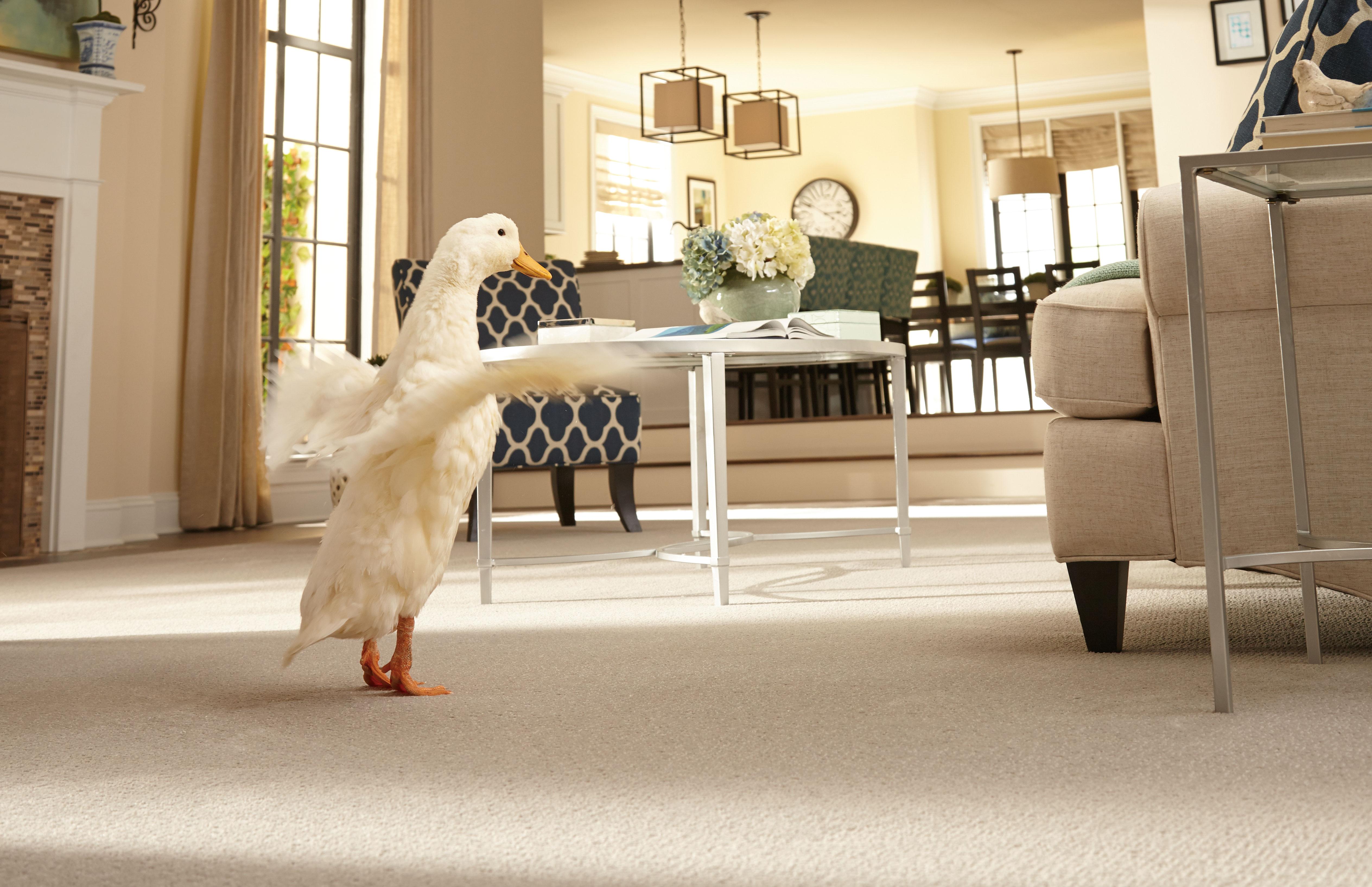 Looking for Pet Friendly Carpet Mohawk has Pet Proof Carpet ...